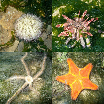 Starfish and Sea Urchins